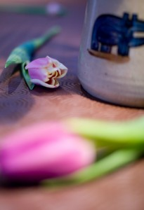 DoF flower photo