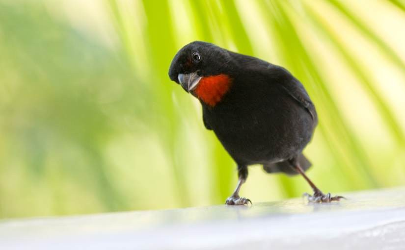 Incubator: The Birds